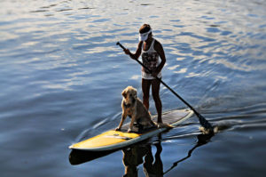 train-dog-on-paddle-board